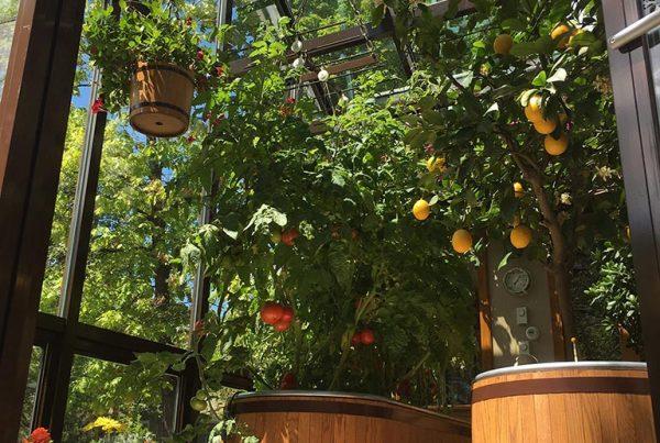 Flowers, tomatoes, lemons